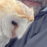 barn owl closeup