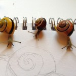 "Land snails ""sitting"" for their portrait"